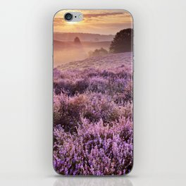 II - Blooming heather at sunrise, Posbank, The Netherlands iPhone Skin