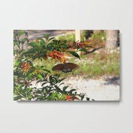Butterfly andFirebush Metal Print