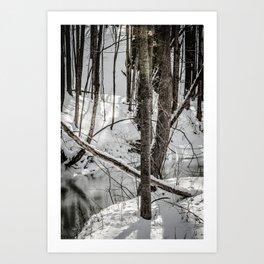 Winter Woods & Creek Art Print