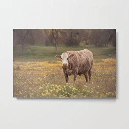 Cow in Wildflower Field Metal Print