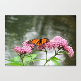 Monarch at Waterford Bend Park 1 Canvas Print