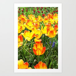 tulips, tulips, tulips Art Print