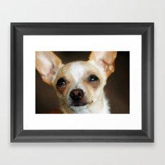 Chihuahua Framed Art Print