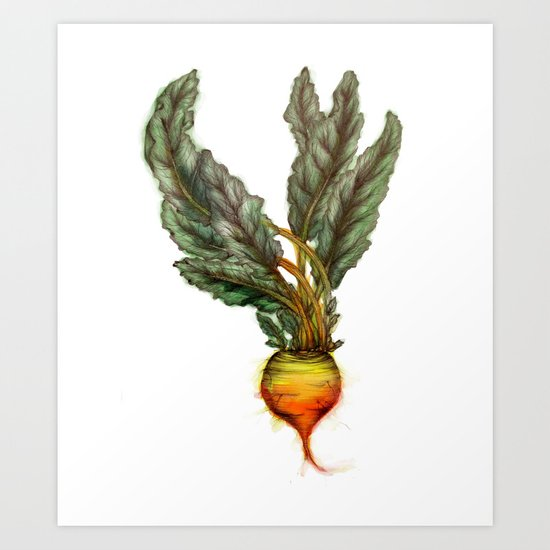 Rooted: The Golden Beet Art Print