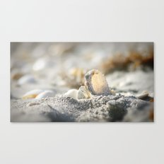 A Shell Canvas Print