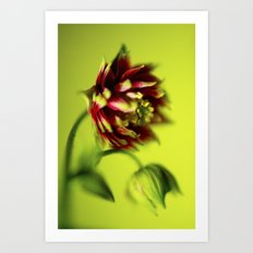 Sleepy Columbine Art Print