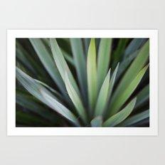 Yucca #6 Art Print