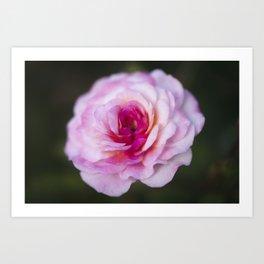 Stunning Pink Rose Closeup Macro Photo Art Print
