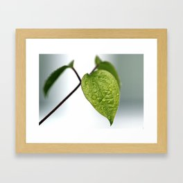 Raindrop Leaves Framed Art Print