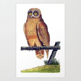 Cayenne Owl Art Print