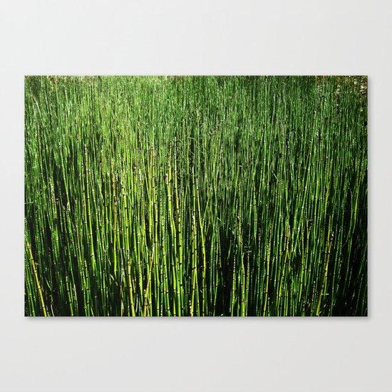 Wallgrass Canvas Print