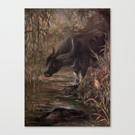 Vintage Water Buffalo Painting (1909) Canvas Print