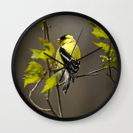 Goldfinch in Song Wall Clock