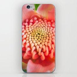Wonderful bright pink waratah bud iPhone Skin