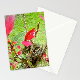 Mini Bird's Nest Stationery Cards