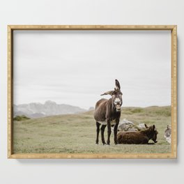 Cute smiling donkey in Seceda, near Ortisei  | Dolomites Italy travel photography Art Print Serving Tray