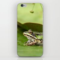 frog iPhone & iPod Skins featuring Frog by Jana Behr