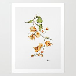 Orange Bougainvillea Illustration Art Print