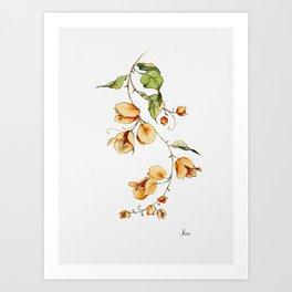 Orange Bougainvillea Illustration Art Print