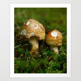 Mushrooms Art Print