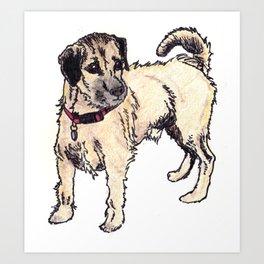 Dexter the Border Terrier Art Print