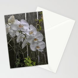 White Moth Orchid Stationery Cards