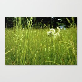 Wild White and Free Canvas Print