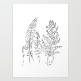 Minimal Line Art Fern Leaves Art Print