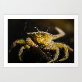 Polite crab Art Print