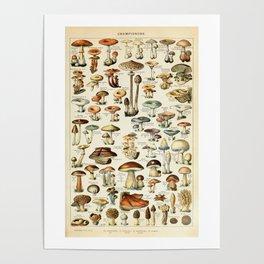 Vintage Mushroom & Fungi Chart by Adolphe Millot Poster