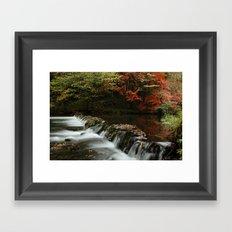 River Dove Framed Art Print