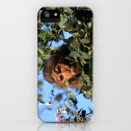 RHESUS MACAQUE MONKEY iPhone Case