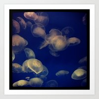 Jellies of the World Art Print