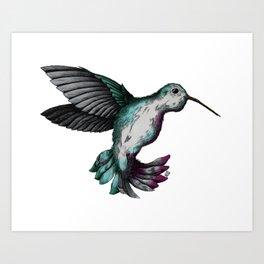Hummingbird Mid-flight  Art Print