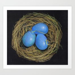 Blue Bird's Eggs in Nest, Color Pencil Drawing Art Print