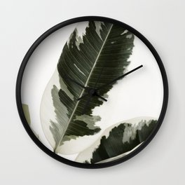 Variegated Rubber Plant 03 Wall Clock