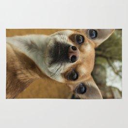 Four eyed Chihuahua?! Rug