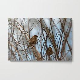 birds in the bush Metal Print