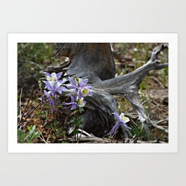 Columbines and Stump Art Print