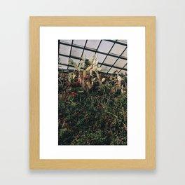 Greenhouse III Framed Art Print