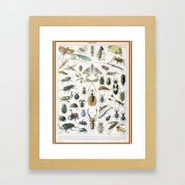 Adolphe Millot- Vintage Insect Print Framed Art Print