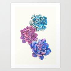 Vibrant Succulents  Art Print
