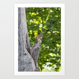 Chipmunk on a Tree Art Print