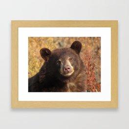 Wonderbear Framed Art Print