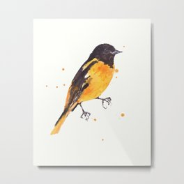 Baltimore Oriole, Bird paintings, black and orange, american birds, ornithologist pillow Metal Print