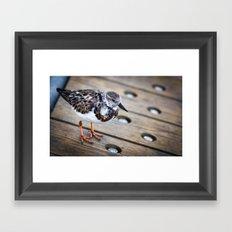 Boardwalk Bird Framed Art Print