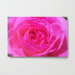 Artsy Pink Rose by Reay of Light Photography Metal Print