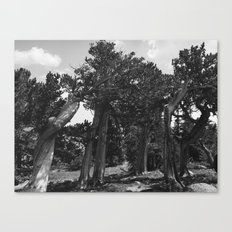 leaning trees Canvas Print