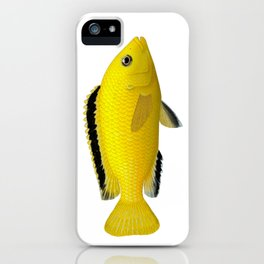 Malawi cichlids Labidochromis caeruleus female iPhone Case