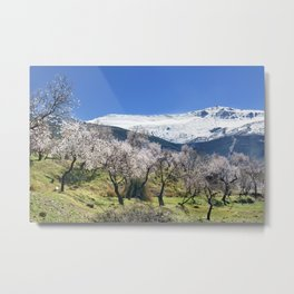 Flowering Almond At The Mountains II Metal Print